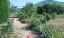 Mon jardin aromatique